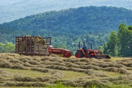 Summer Farming