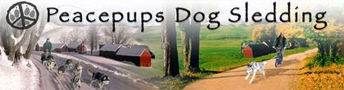 Peacepups Dog Sledding
